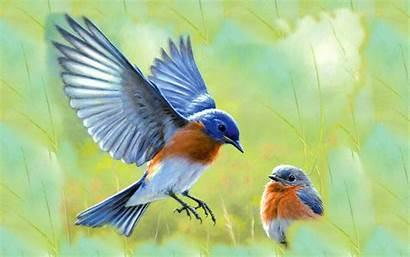 Bluebird Eastern Bird Wallpapers Bluebirds Background Birds