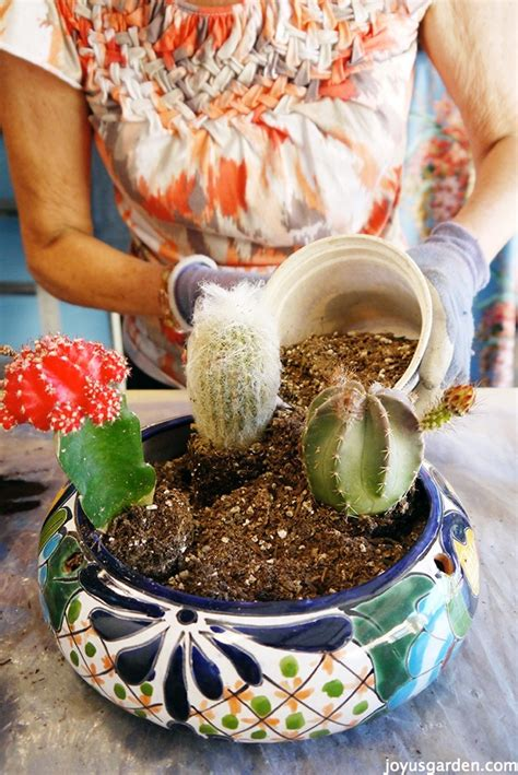 cactus dish garden my secret weapon for planting a cactus dish garden
