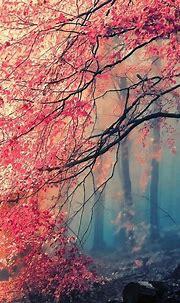Free download Beautiful iPhone Wallpapers Top Beautiful ...