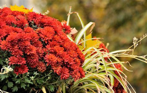 Welche Pflanzen Im Herbst Pflanzen by Pflanzen Im Herbst B Ume Und Str Ucher Im Herbst Pflanzen