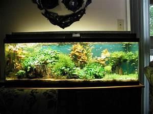 Tropical Fish Decorations For Aquariums Aquarium Design