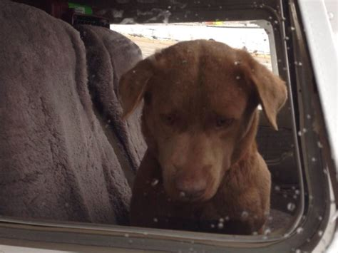 dogs rescued  high kill shelter death row