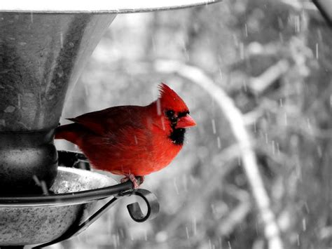 Selective Color Coloring Download Selective Color