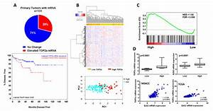 Increased Top2a Expression Selects For Aggressive Human