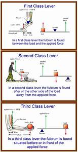 Third Class Lever Definition - Anatomy