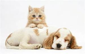 Pictures Of Cute Dogs And Cats Together