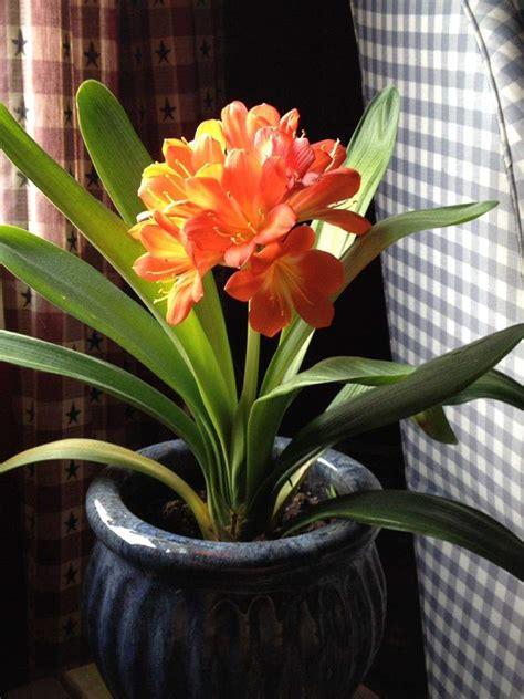 plantes d int 233 rieur 224 fleurs n 233 cessitant peu de lumi 232 re