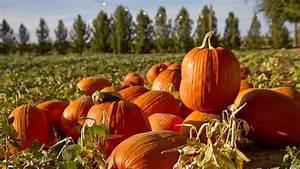 Best, Halloween, 2020, Pumpkin, Patches, In, Phoenix, And, Around, Arizona