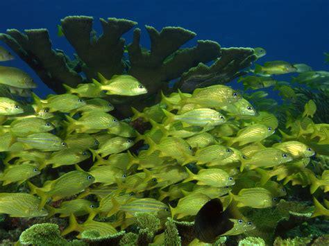 wallpapers underwater wallpapers hd