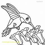 Hummingbirds Getdrawings Drawing sketch template