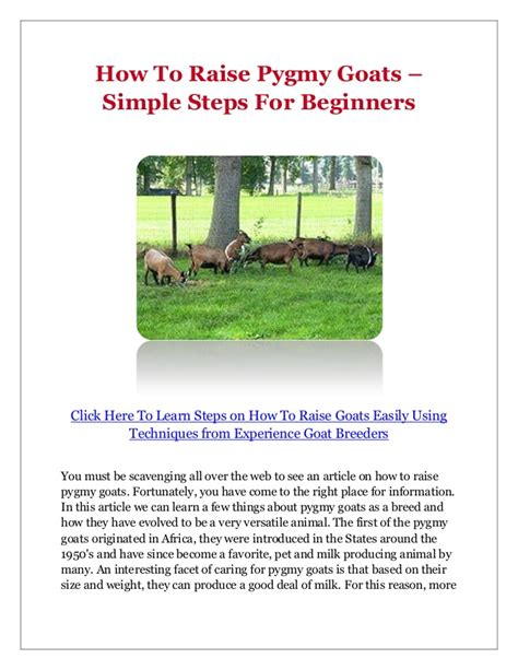 how to raise goats how to raise pygmy goats simple steps for beginners