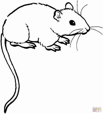 Ausmalbilder Mouse Coloring Maus Mice Rat Ausmalbild