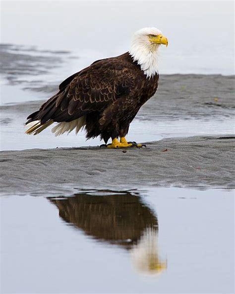 Kenai Peninsula nature   Alaska: Kenai Peninsula   New ...