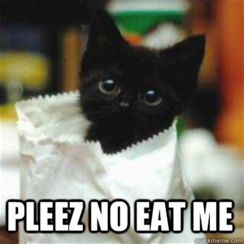 Scared Cat Meme - scared cat meme www pixshark com images galleries with a bite