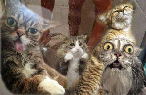 lustige katzenvideos und bilder weltkatzentag  die