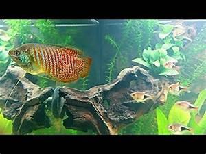 Fische Aquarium Hamburg : juwel aquarium rio 180 l gesellschaftsbecken 5 tage nach ~ Lizthompson.info Haus und Dekorationen