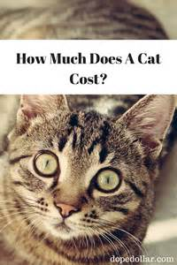 how much do cats cost 17 best images about best of dope dollar on