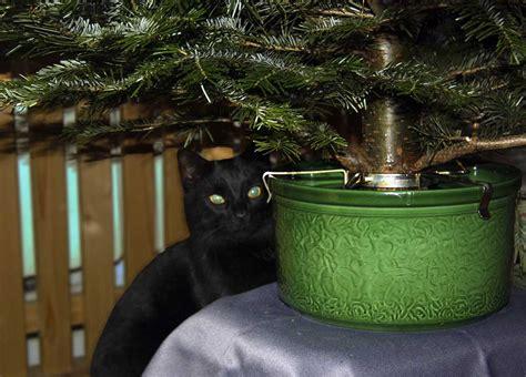 Weihnachtsbaum Länger Frisch by Wasser H 228 Lt Weihnachtsbaum Frisch Kein Zusatz