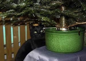 Weihnachtsbaum Wasser Geben : wasser h lt weihnachtsbaum frisch kein zusatz erforderlich octobernews ~ Bigdaddyawards.com Haus und Dekorationen