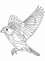 Coloring Pages Canary Bird Flying Flight Drawing Grosbeak Birds Finch Printable Getdrawings Colorings Colors Sparrow Recommended sketch template