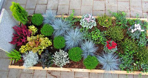 Garten Pflanzen Winterhart by Pflanzen Die Viel Sonne Vertragen Und Winterhart Sind