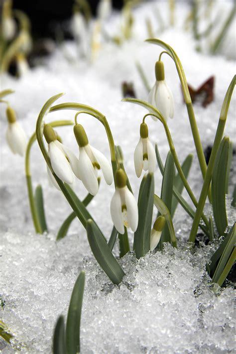 Kas darāms dārzā no 3. līdz 10. martam | Praktiski.lv