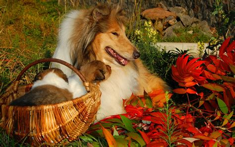 Fall Wallpaper With Animals - fall with animal high definition wallpapers 4067 amazing