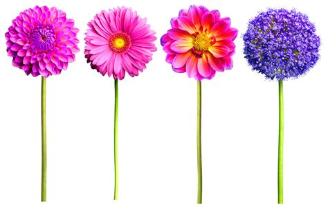 pink or purple flowers valentines day special 7 flowers and what they mean your social lifestyle news portal in asia