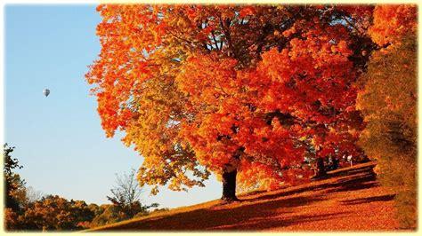 Orange Fall Wallpaper by Free Desktop Wallpapers Trees Wallpaper Cave