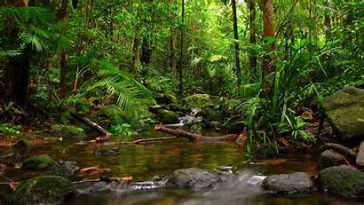 Forest Tropical Rain Wallpapers