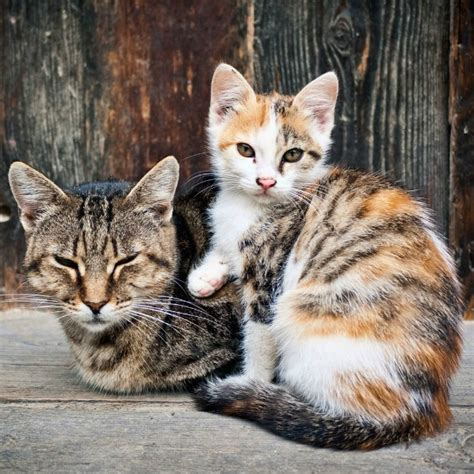 Humanely Regulating The Feral Cat Population — Greatergood