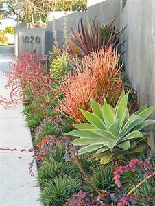 best 25 drought tolerant garden ideas on pinterest With make simple fresh and modern drought tolerant landscaping
