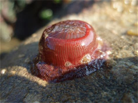 rocky shore animals environmental leadership program