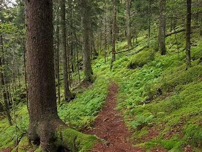 Creek Baxter Trail Hiking Tennessee Tn Why