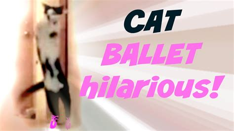 funny cat  ballerina cat performs fun kid vid  kid