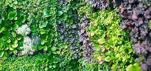 Mur Végétal Extérieur : modules pour mur v g tal et jardin vertical vertiss ~ Premium-room.com Idées de Décoration