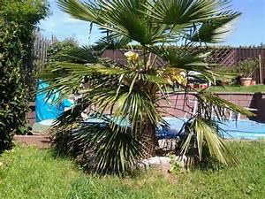 überwintern Von Palmen : berwintern von palmen palme berwinterung im gew chshaus ~ Michelbontemps.com Haus und Dekorationen