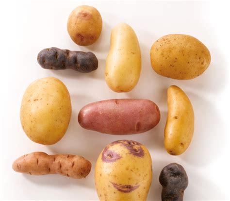 pomme de terre en chambre pommes de terre du centre