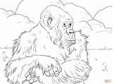 Gorilla Coloring Mountain Printable Coloriage Gorille Cartoon Cliparts Animals Coloriages Imprimer Ape Gorillas Colorare Template Pianura Craft Sketch Montagnes Disegno sketch template