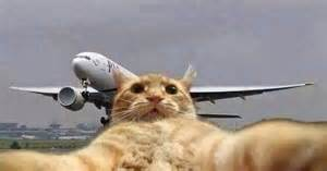 cat on a plane cat selfie with a plane aιяρɩαηєѕ cats