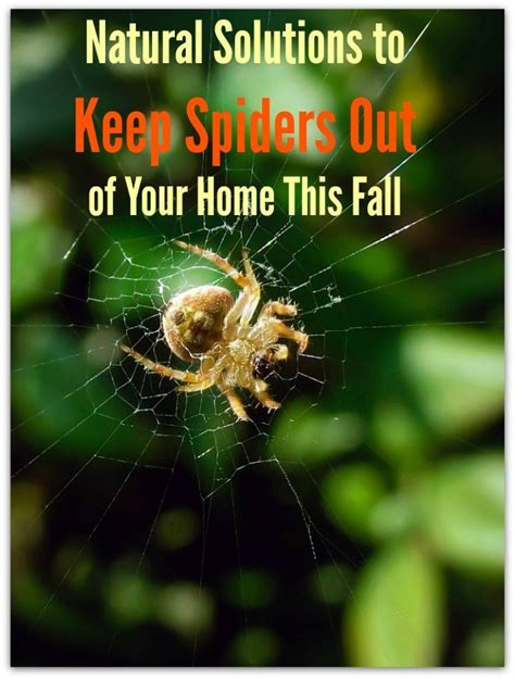 keep spiders out of house solutions to keep spiders out of your home this 7624