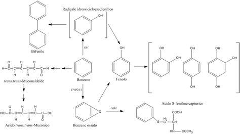 Metabolisme wiki