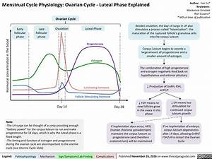Menstrual Cycle Physiology  Ovarian Cycle  U2013 Luteal Phase