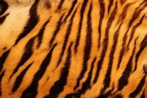 Image Gallery tiger stripes