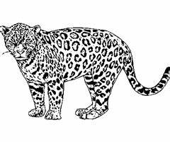 Dessin Jaguar Facile : comment dessiner un jaguar ~ Maxctalentgroup.com Avis de Voitures