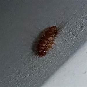 Wie Werde Ich Wespen Los : was ist das f r ein insekt unter meinem bett und wie werde ich es los tiere ~ Watch28wear.com Haus und Dekorationen