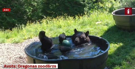 Melnais lācis atvēsinās ūdenī ar bumbu / Raksts