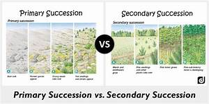 30 Primary And Secondary Succession Venn Diagram