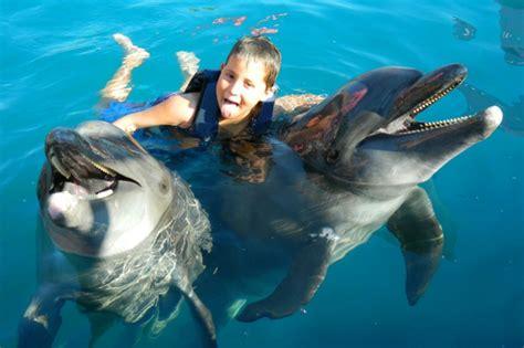 chambre de commerce rennes nager avec les dauphins en piscine 3 r234vez vous de