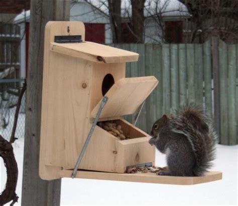 squirrel feeder plans squirrel feeder bird house feeder